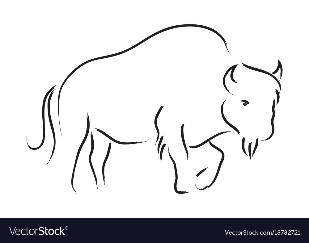 Bison vector image