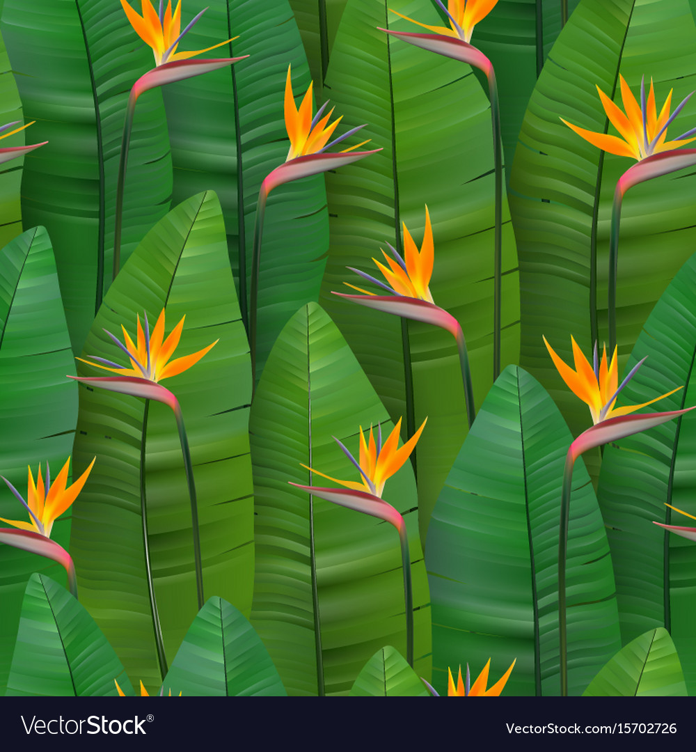 Seamless tropical pattern with strelitzia
