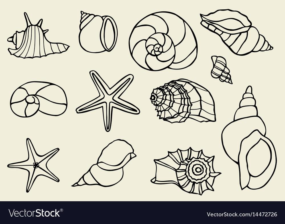 Set of vintage seashells vector image