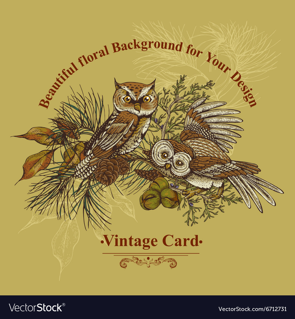 Forest greeting card with owls spruce and fir