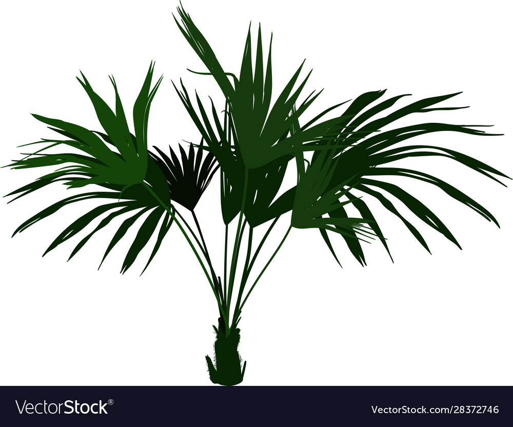 Home palm tree Palm Plant For Home on herb plants for home, vine plants for home, potted plants for home, tropical plants for home, water plants for home, decorative plants for home, indoor plants for home,