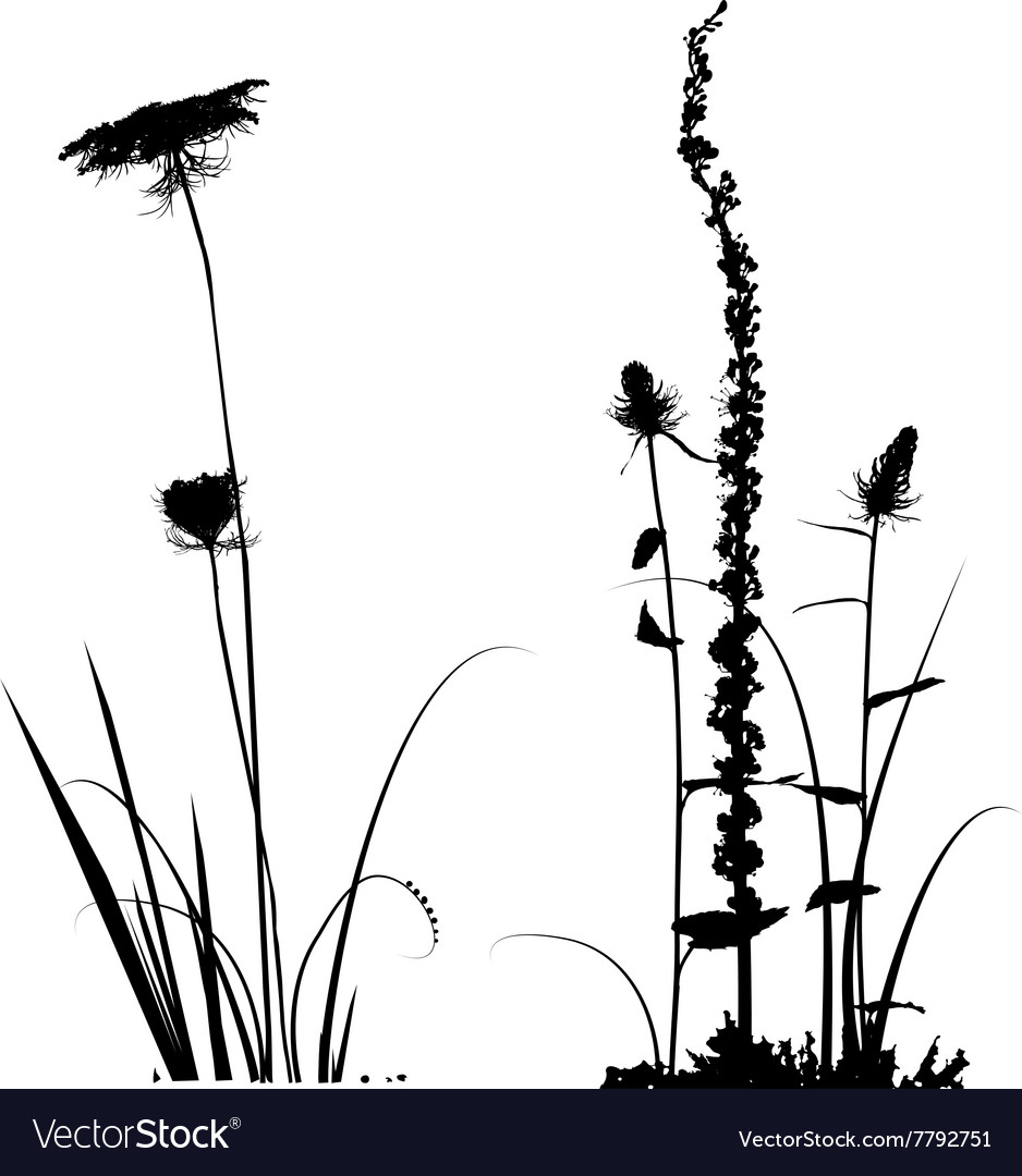 Black and white plants silhouettes vector image