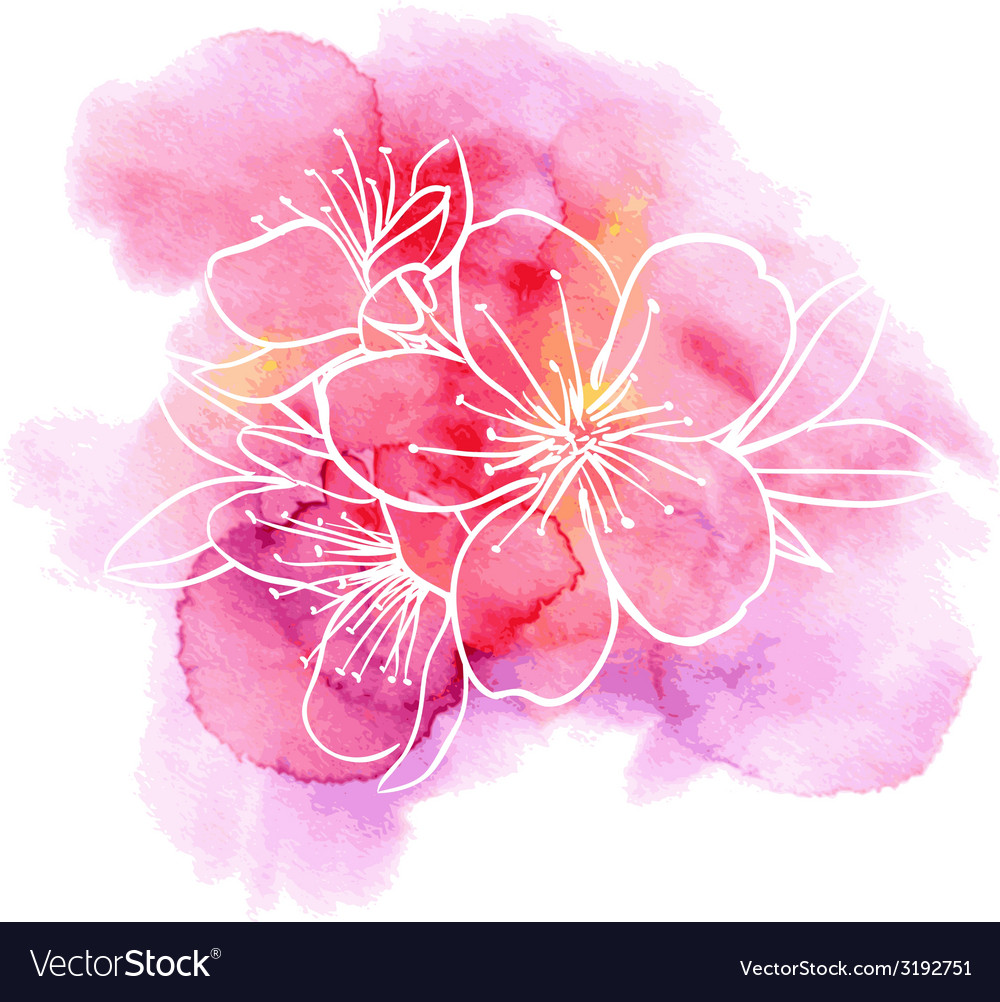 Cherry Flowers On A Watercolor Background Vector Image