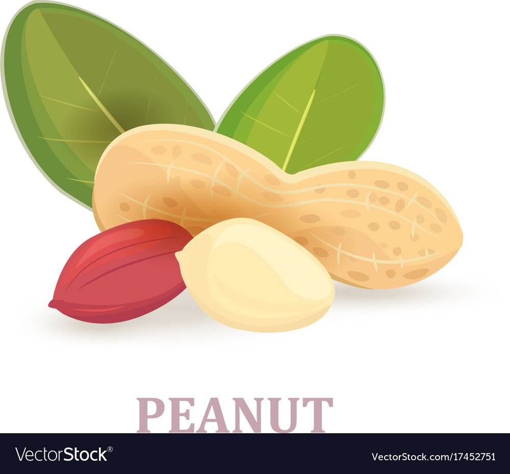 Group of peanuts with leaves on white background