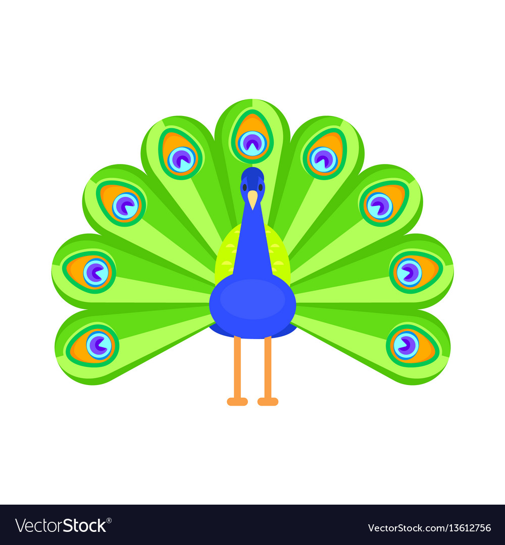Flat style of peacock