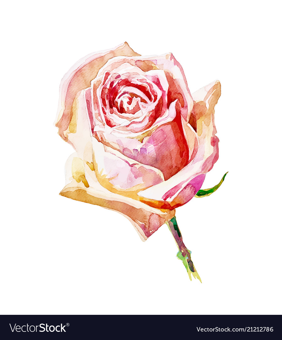 Decorative hand painting of rose isolated on white