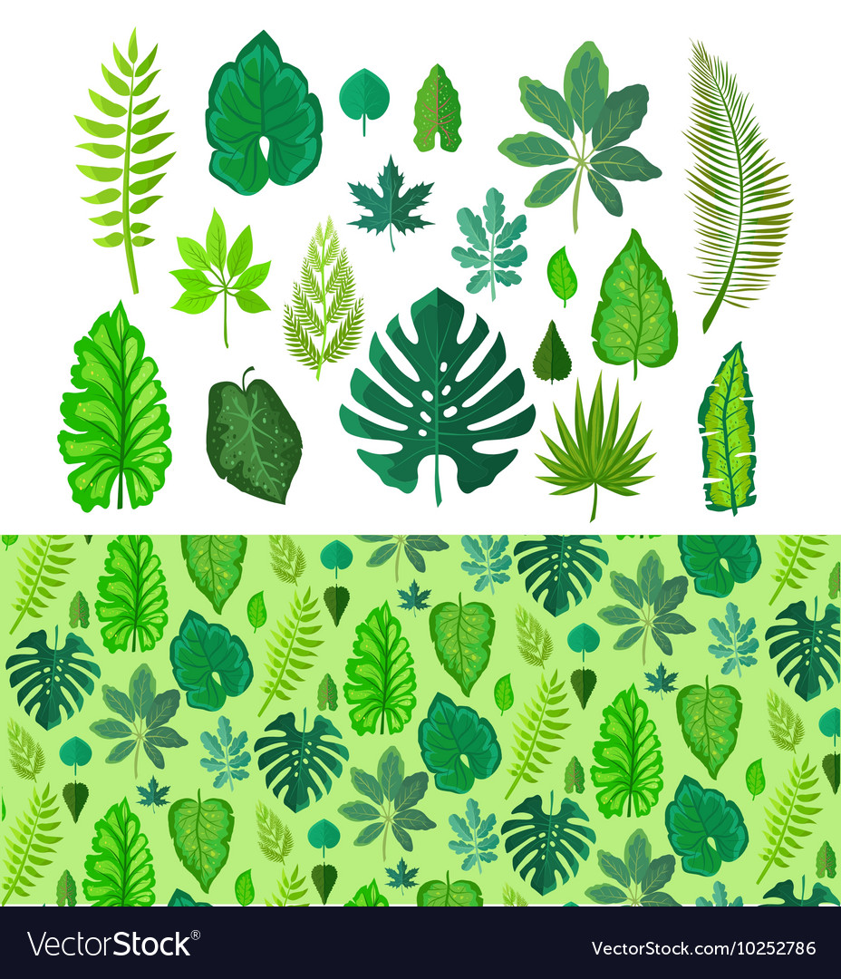 Set of Tropical Leaves Collection Green Leafs