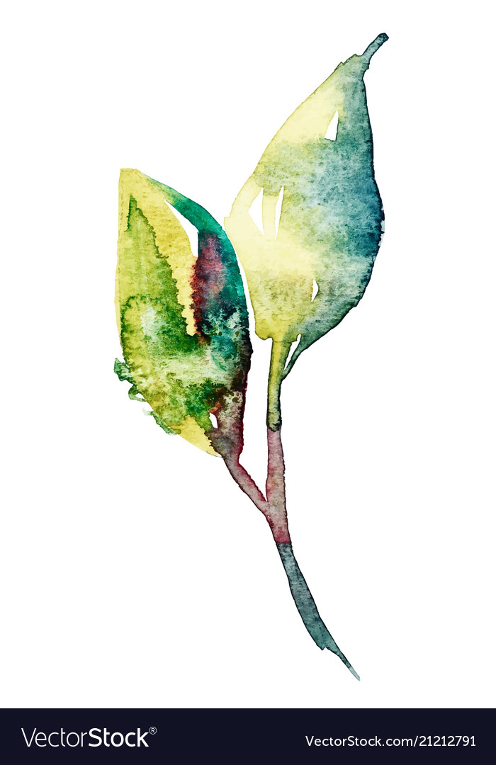 Watercolor sketch two leaves design element