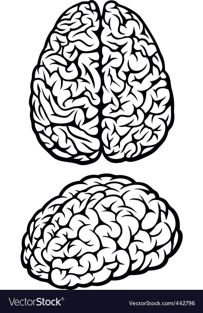 brain royalty free vector image vectorstock rh vectorstock com brain vector graphic brain vector art free