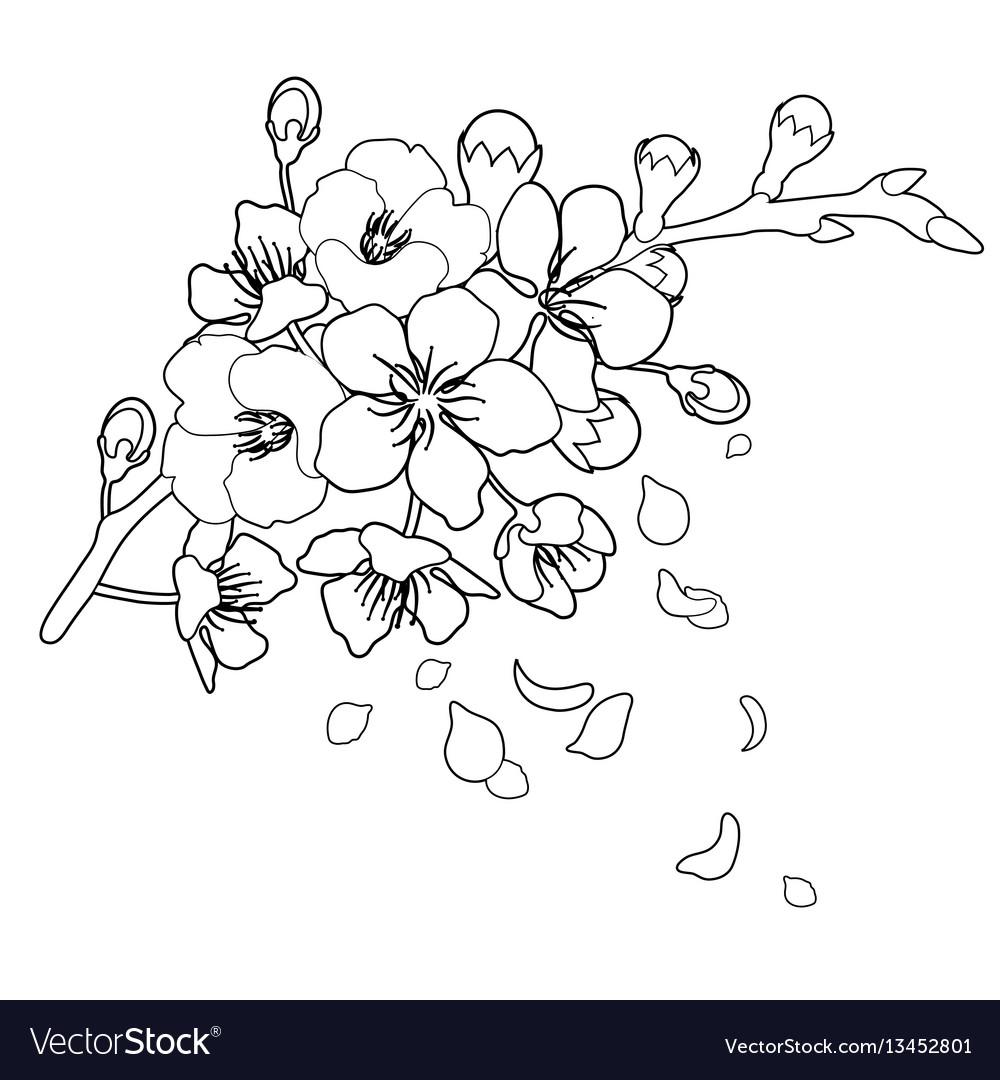 Graphic sakura flowers
