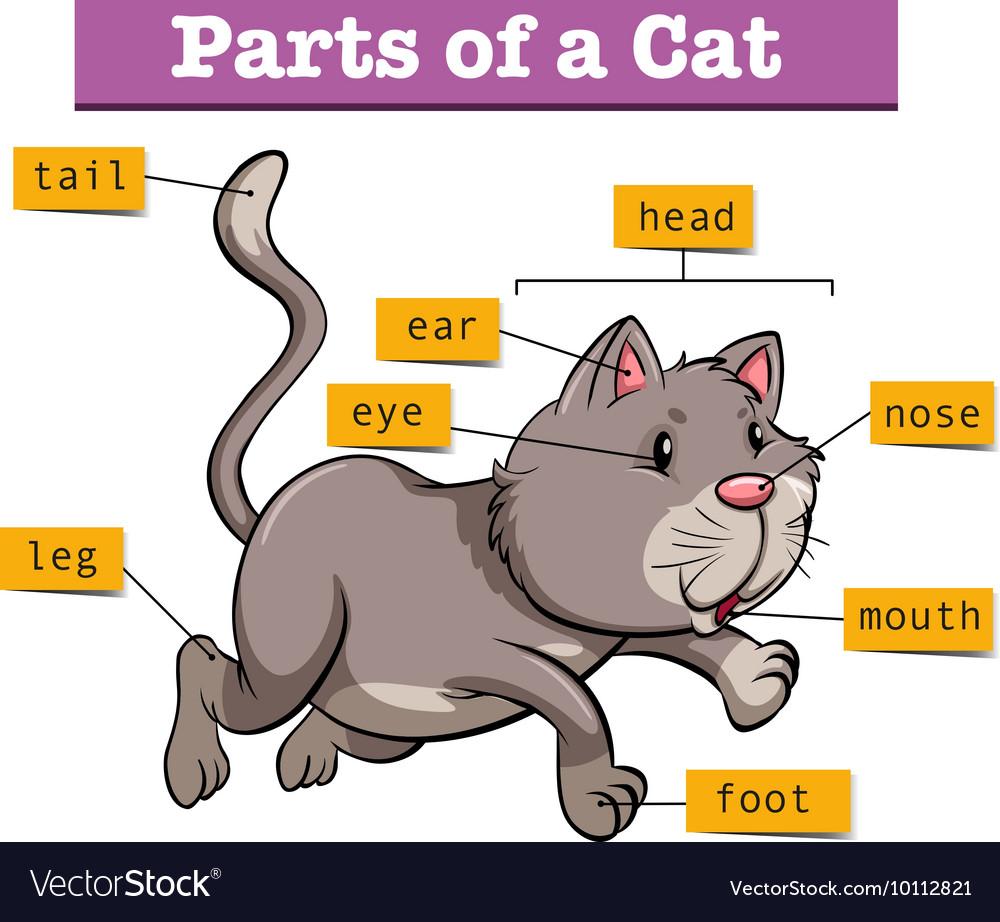 Feline Parts Diagram - Block And Schematic Diagrams •