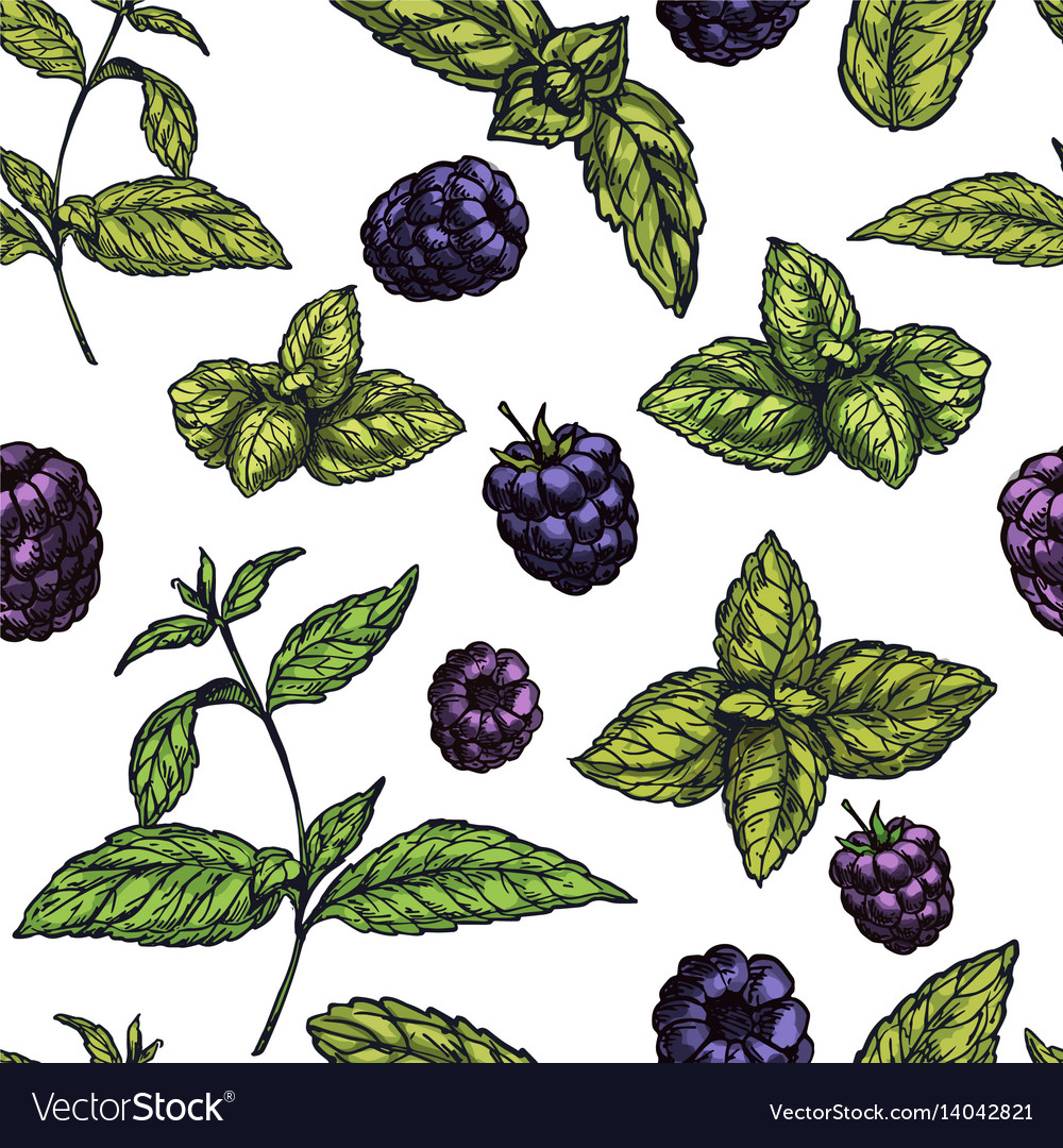 Seamless pattern with mint leaves and blackberries