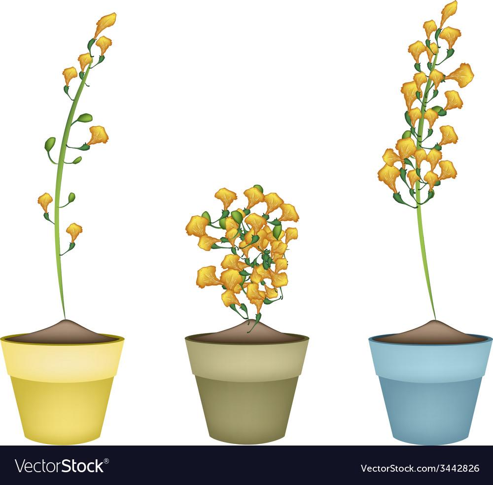 Yellow padauk flower in ceramic flower pots vector image mightylinksfo