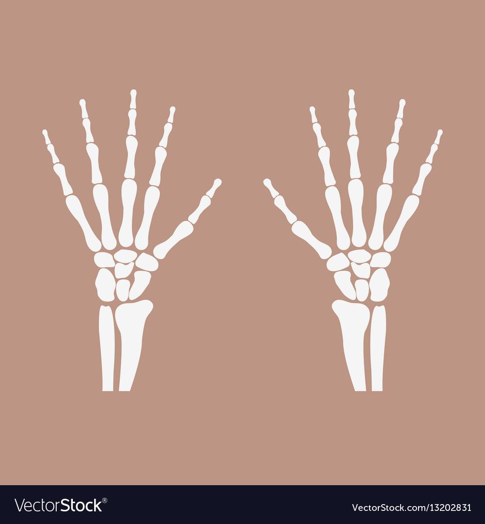 Wrist hands bones Royalty Free Vector Image - VectorStock