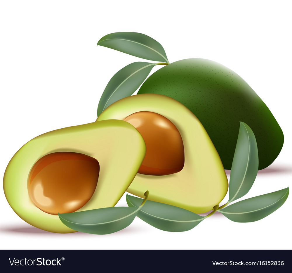 Avocado realistic on white background