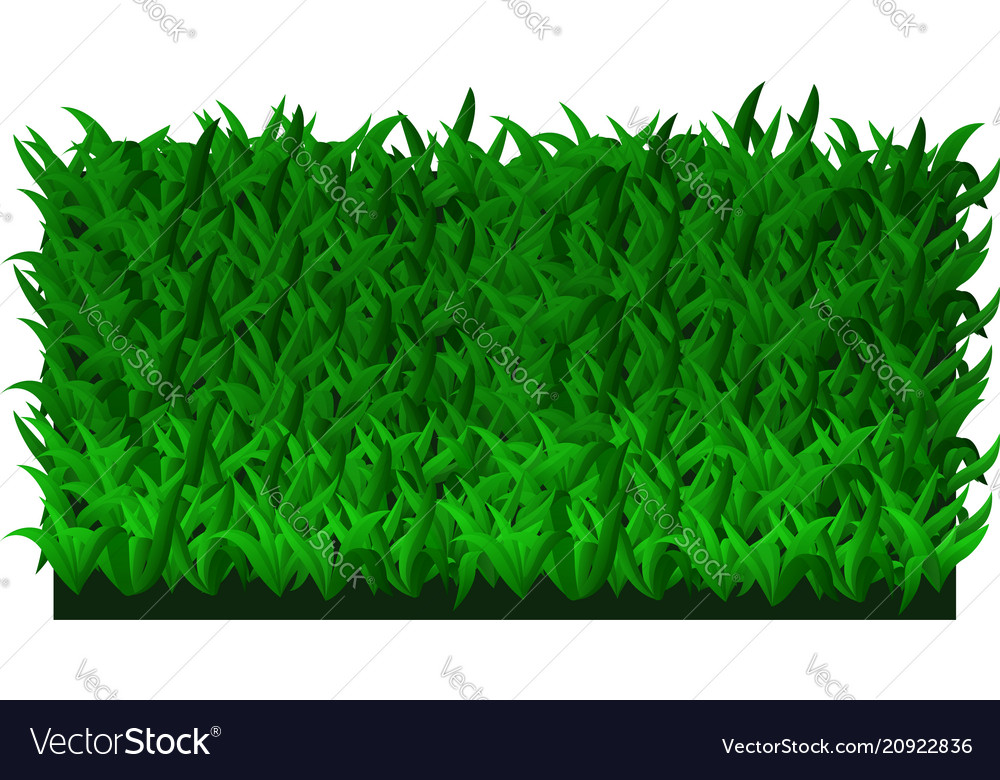 fresh green grass royalty free vector image vectorstock fresh green grass royalty free vector image vectorstock