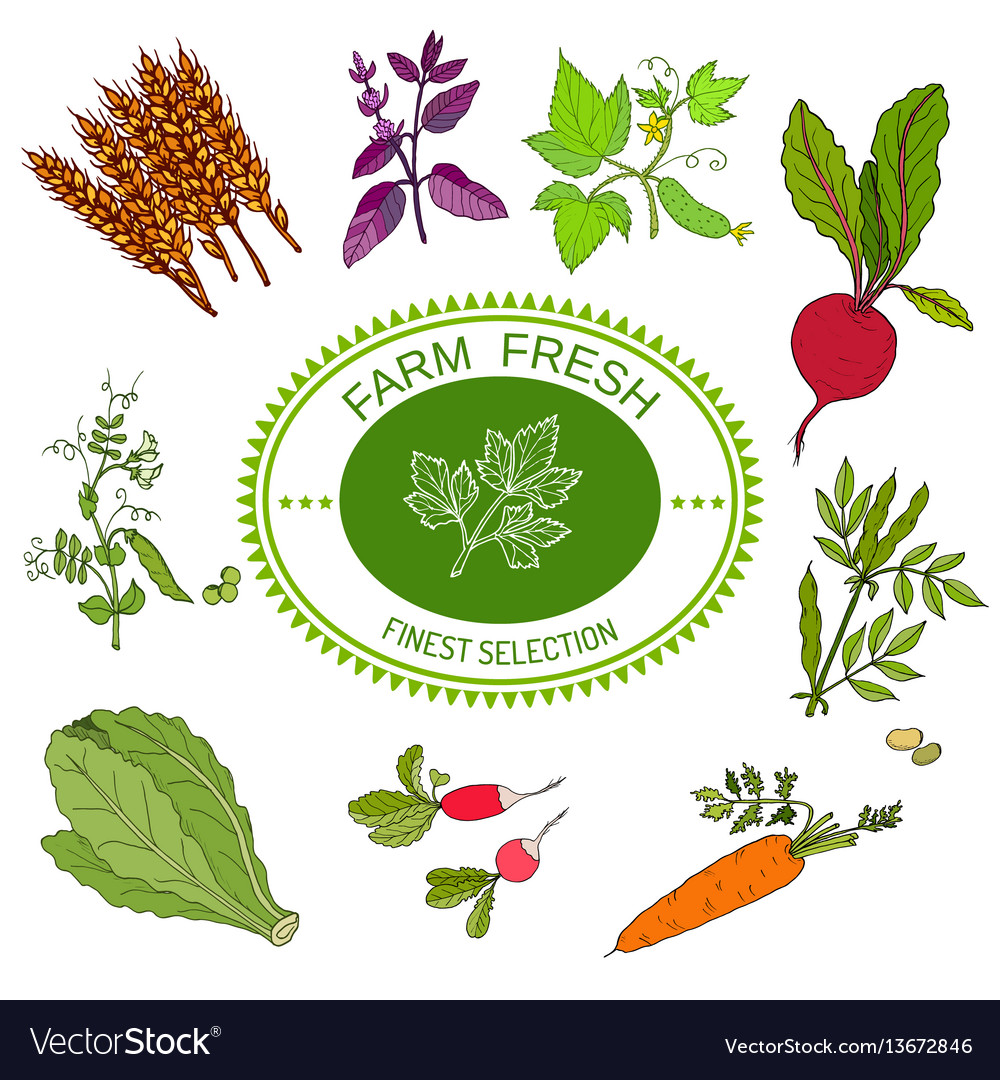 Farmers food design logo and vegetables