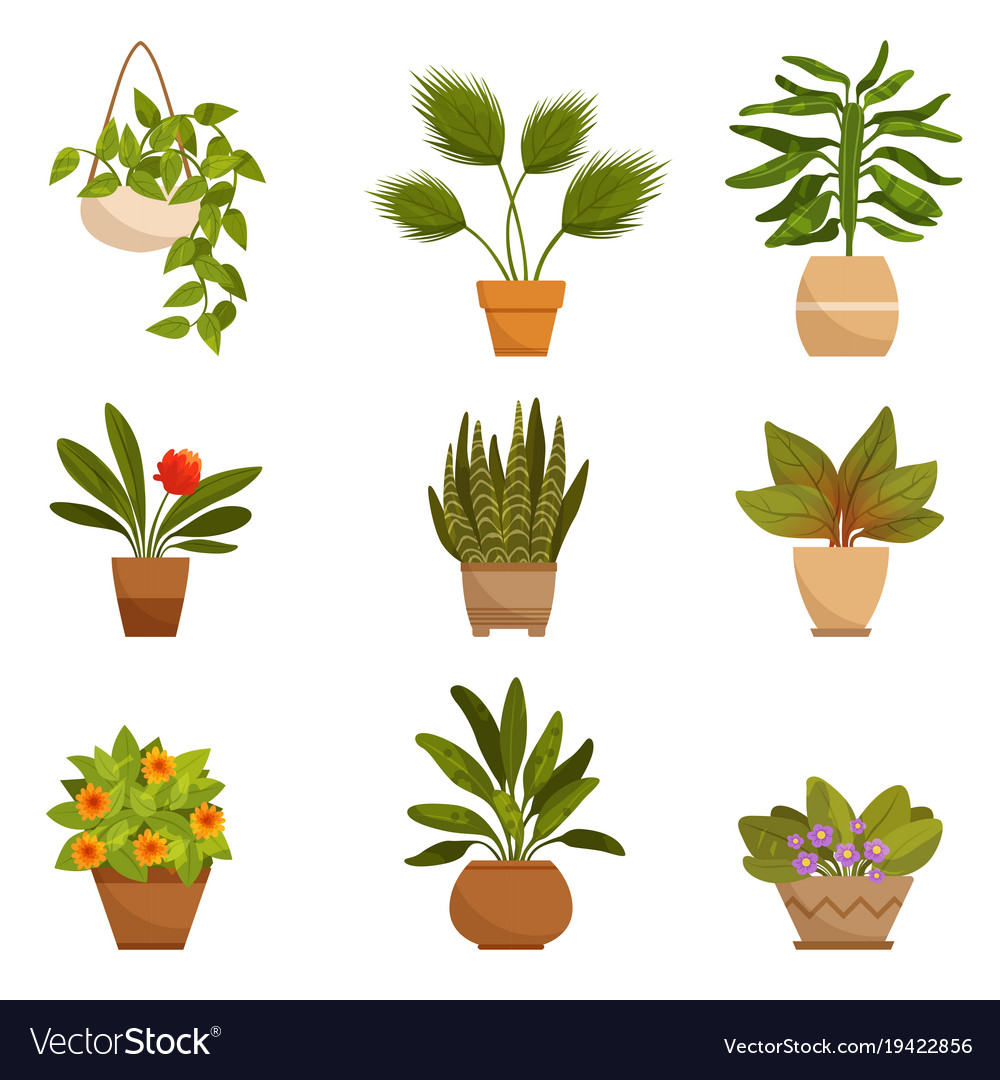 Set Of Home Decorative Plants Royalty Free Vector Image