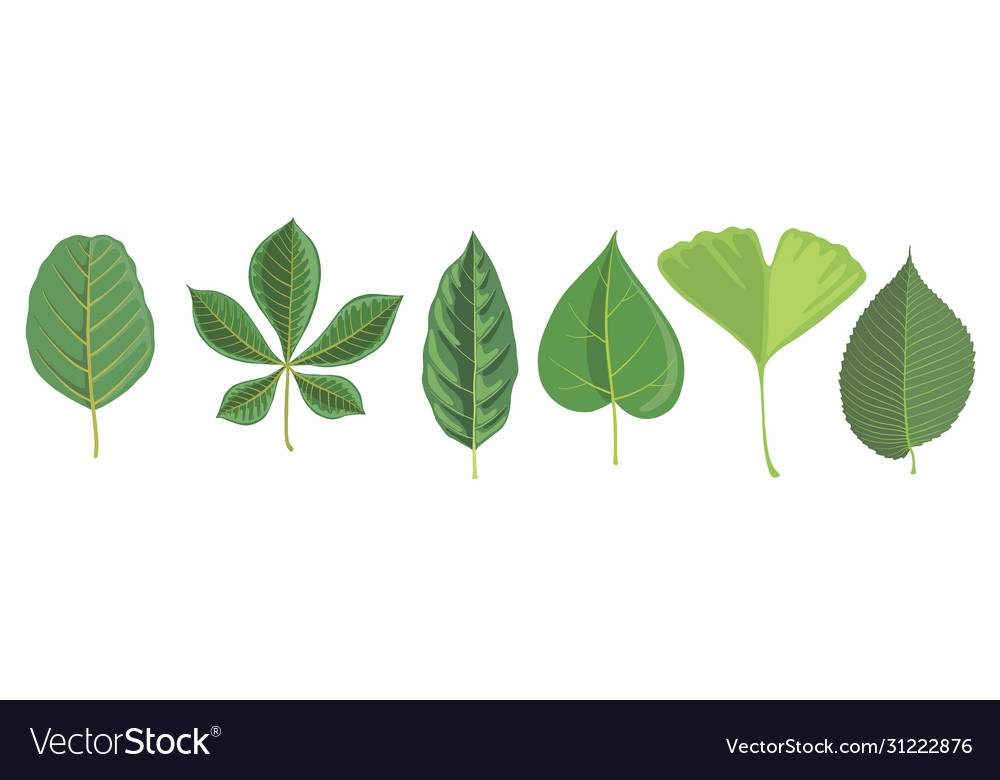 Set tree leaves