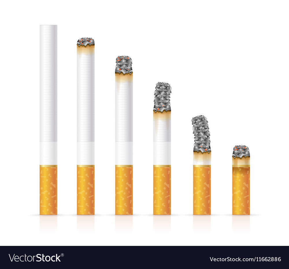 Realistic Cigarette Set Different Stages of Burn vector image
