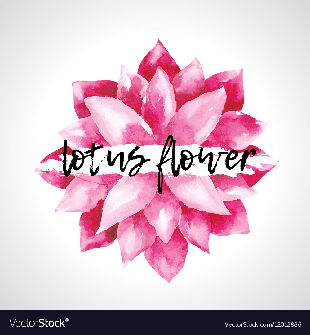 Watercolor Pink Lotus Flowers Isolated Royalty Free Vector