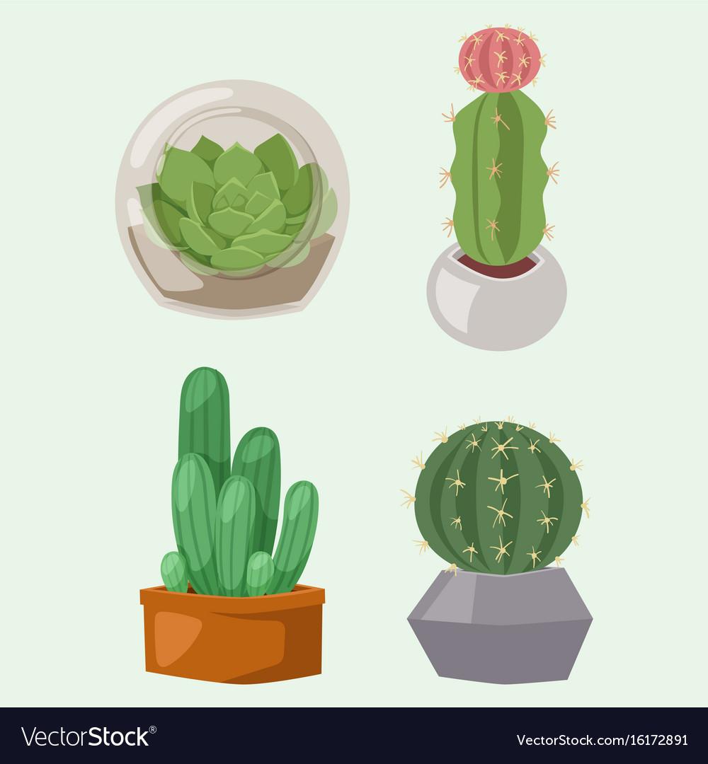 Cactus nature desert flower green mexican