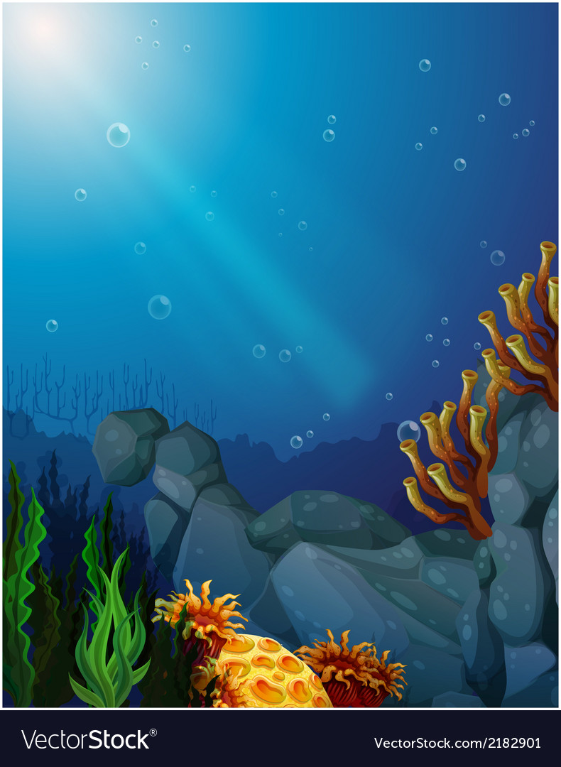 Corals and seaweeds under the sea
