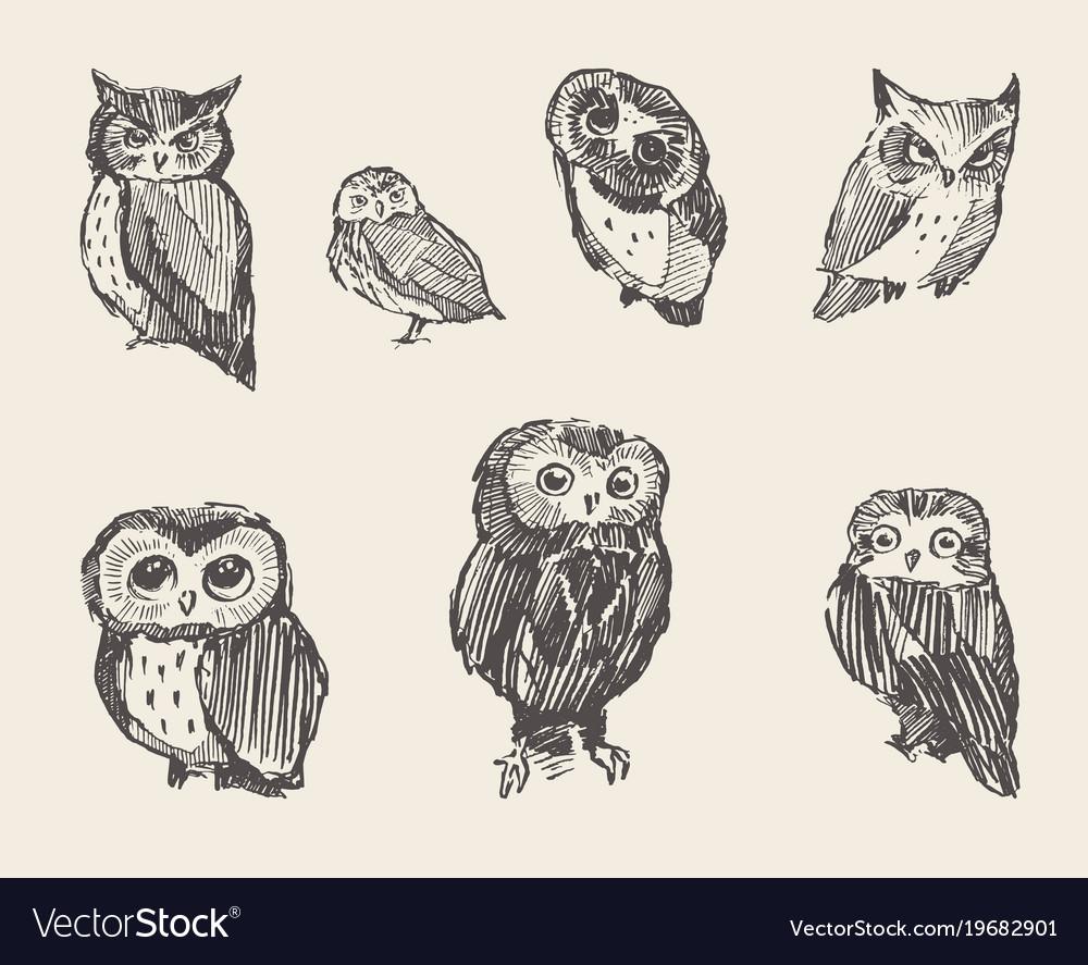 Set drawn owls vintage style