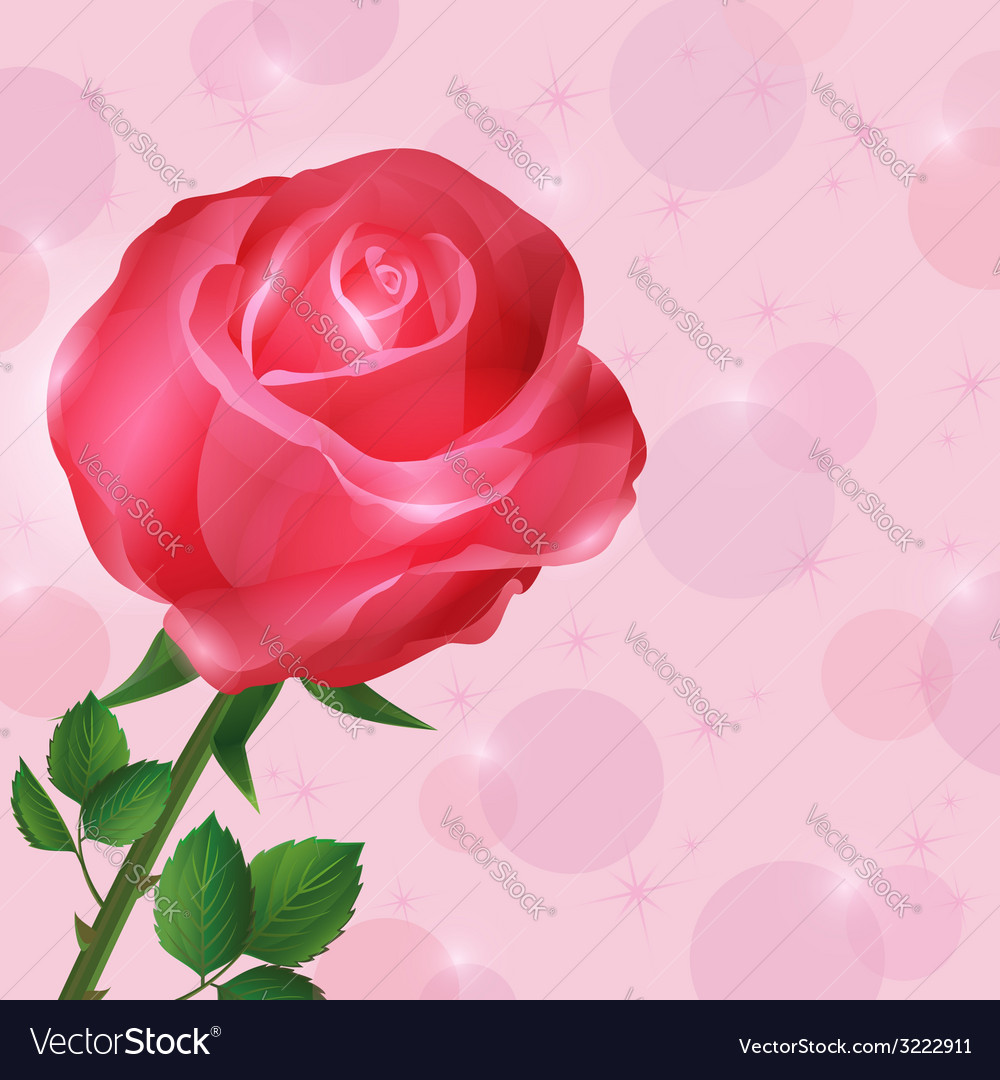 Greeting Or Invitation Card Wallpaper With Rose Vector Image
