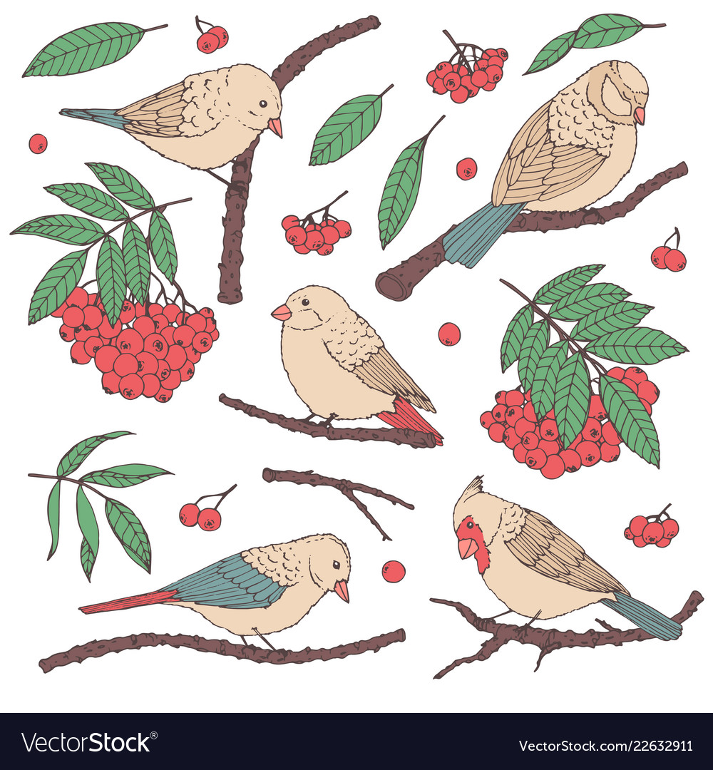 Hand drawn set of birds branches leaves berries