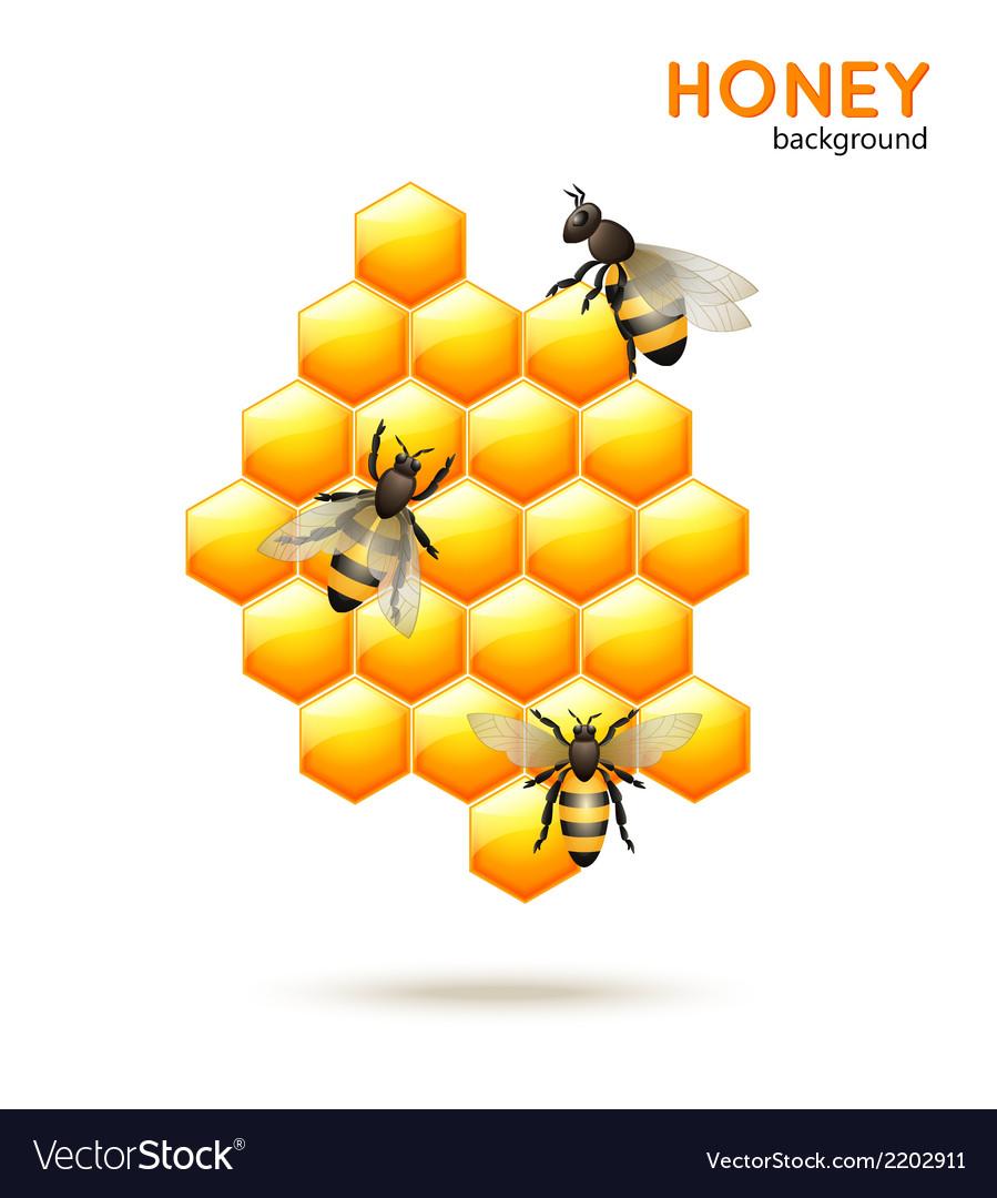 Honey bee background vector image