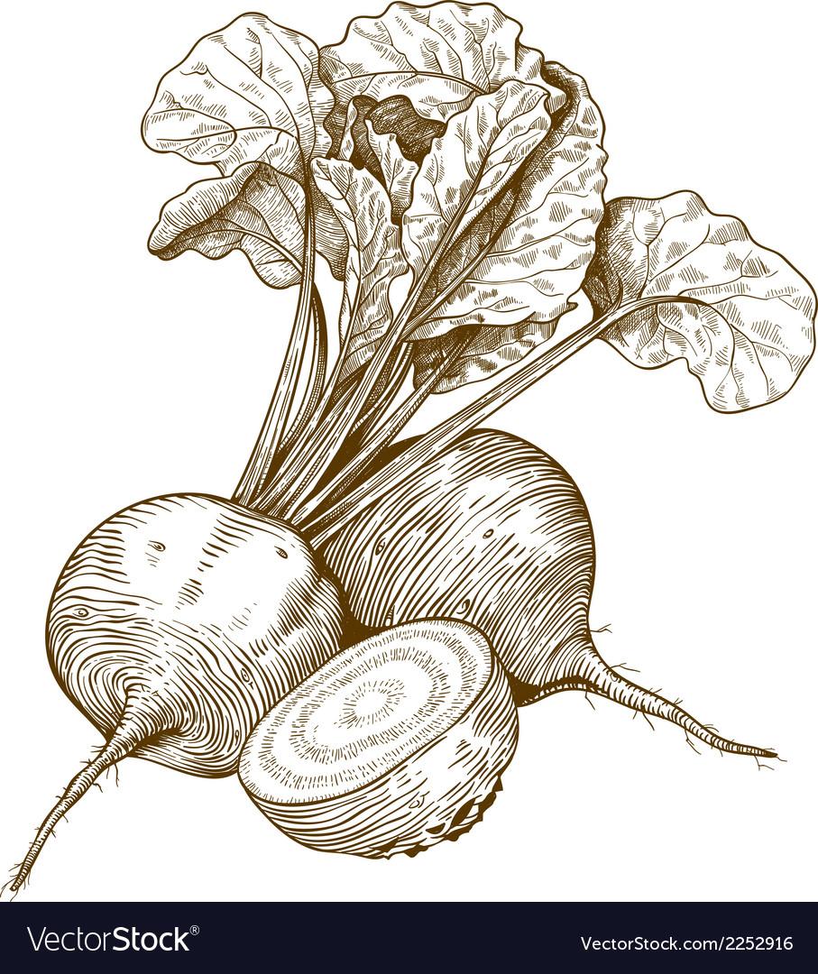 Engraving beet