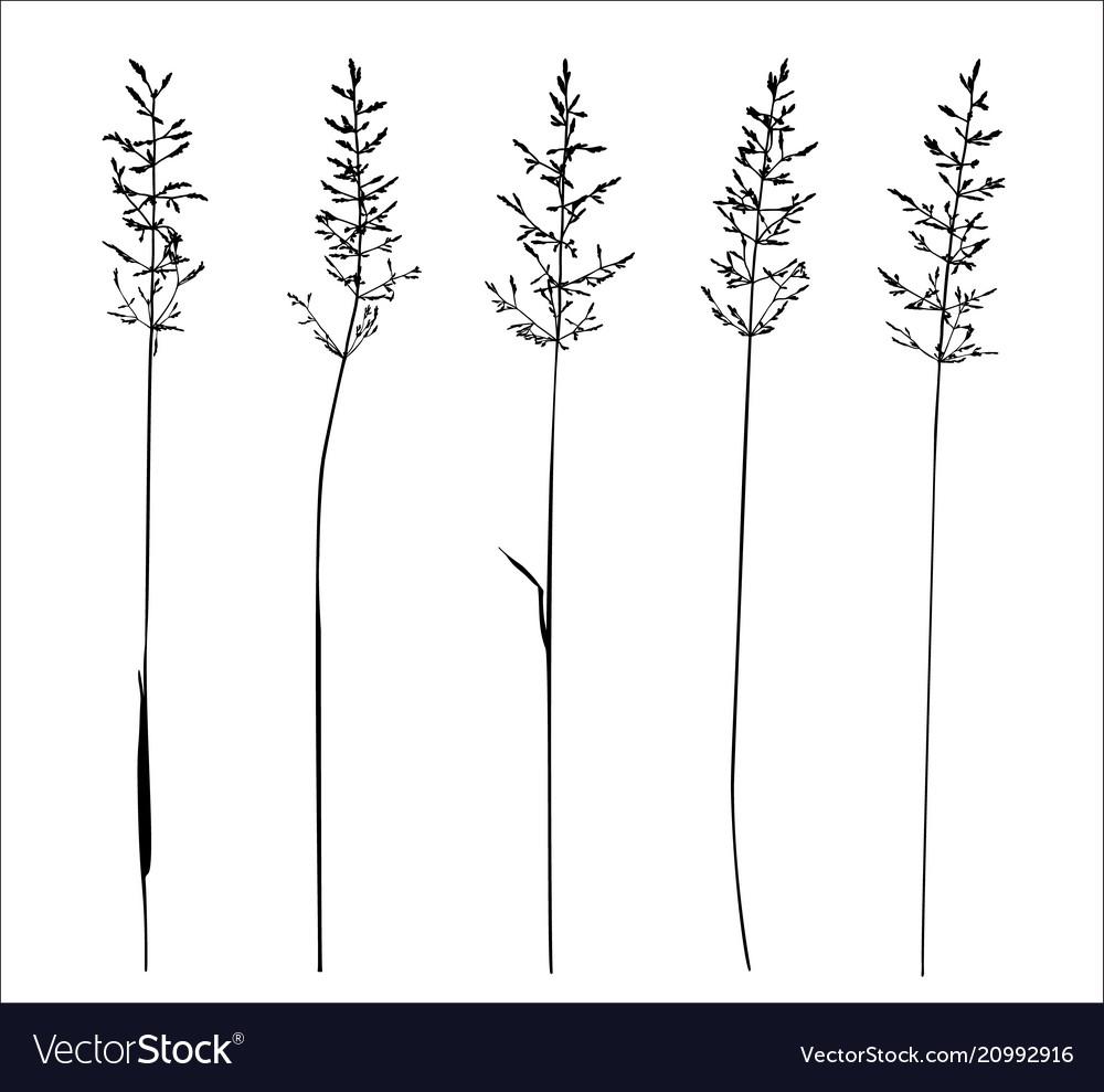 Set of wild herbs silhouettes