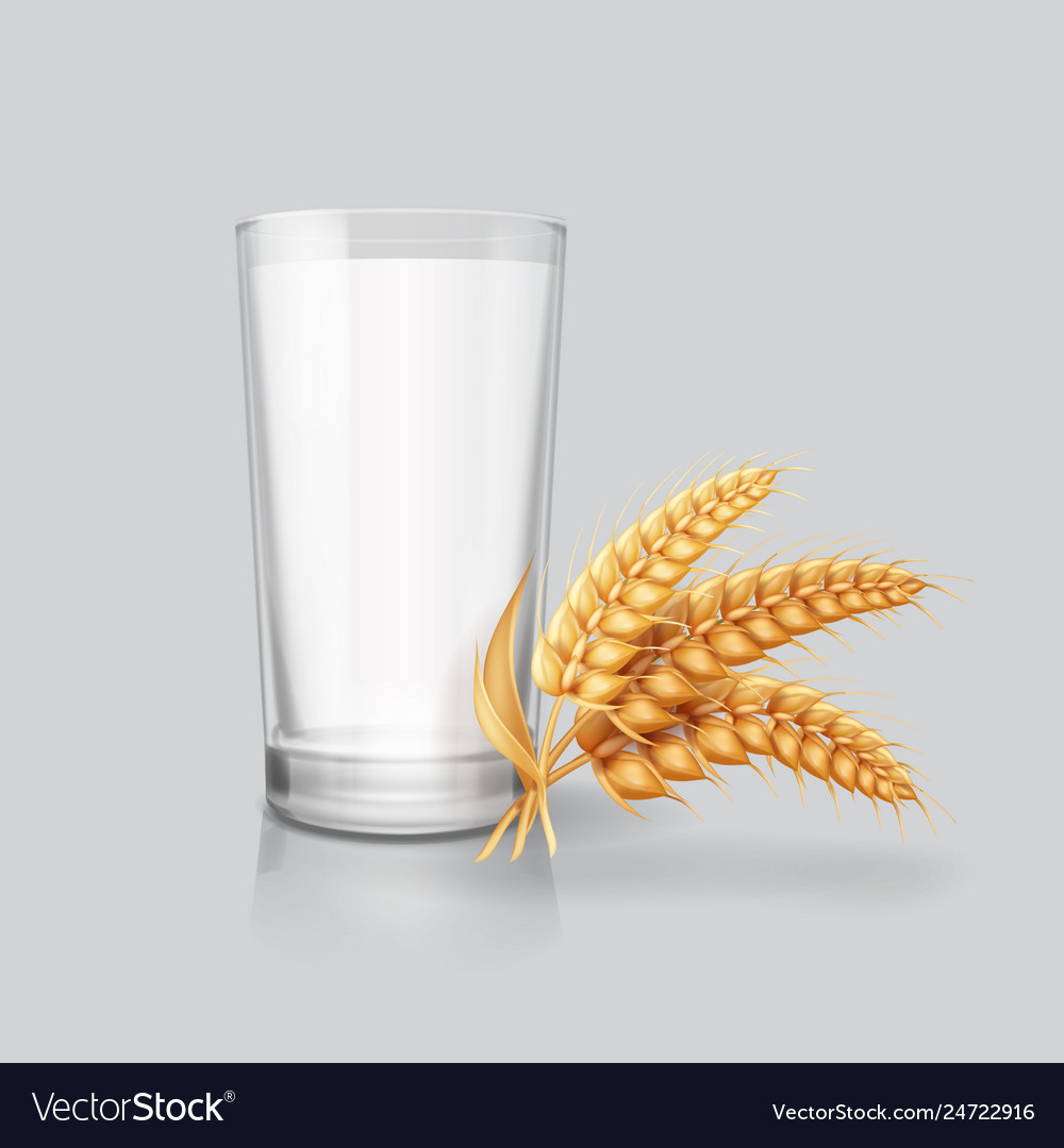 Wheat ears spikelets and milk in drinking glass