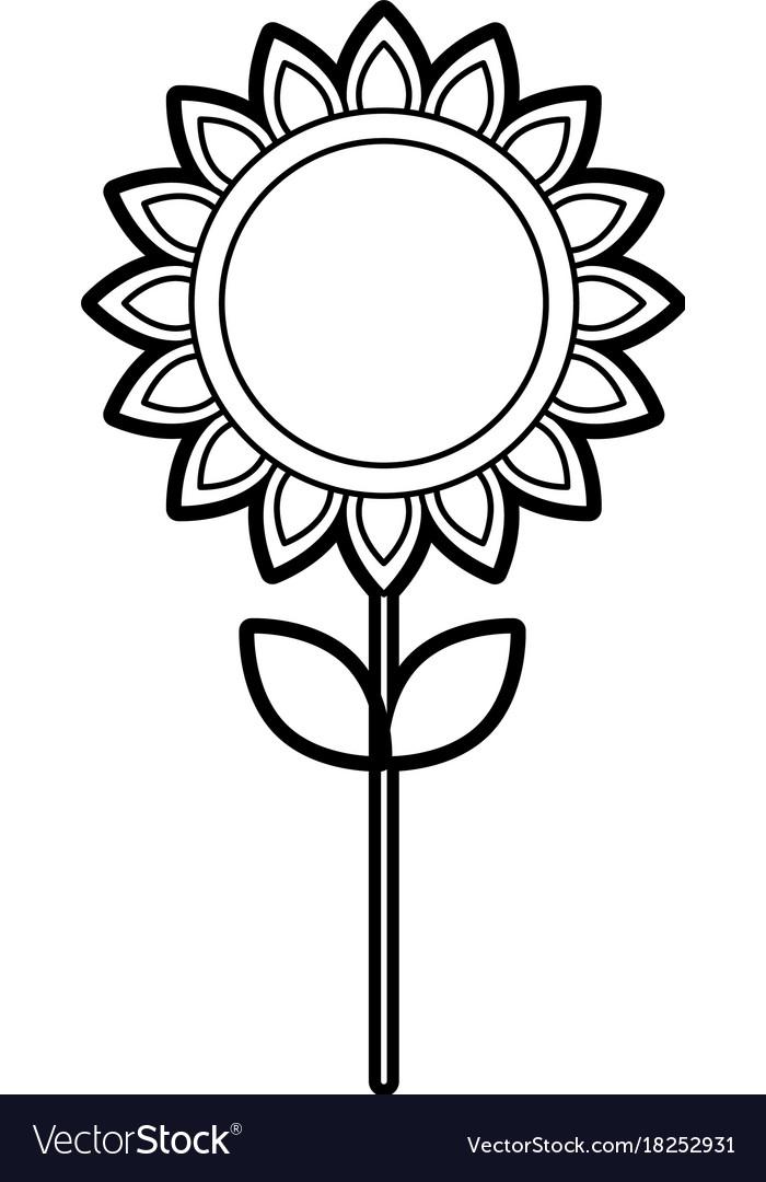 Sunflower natural plant petal decoration