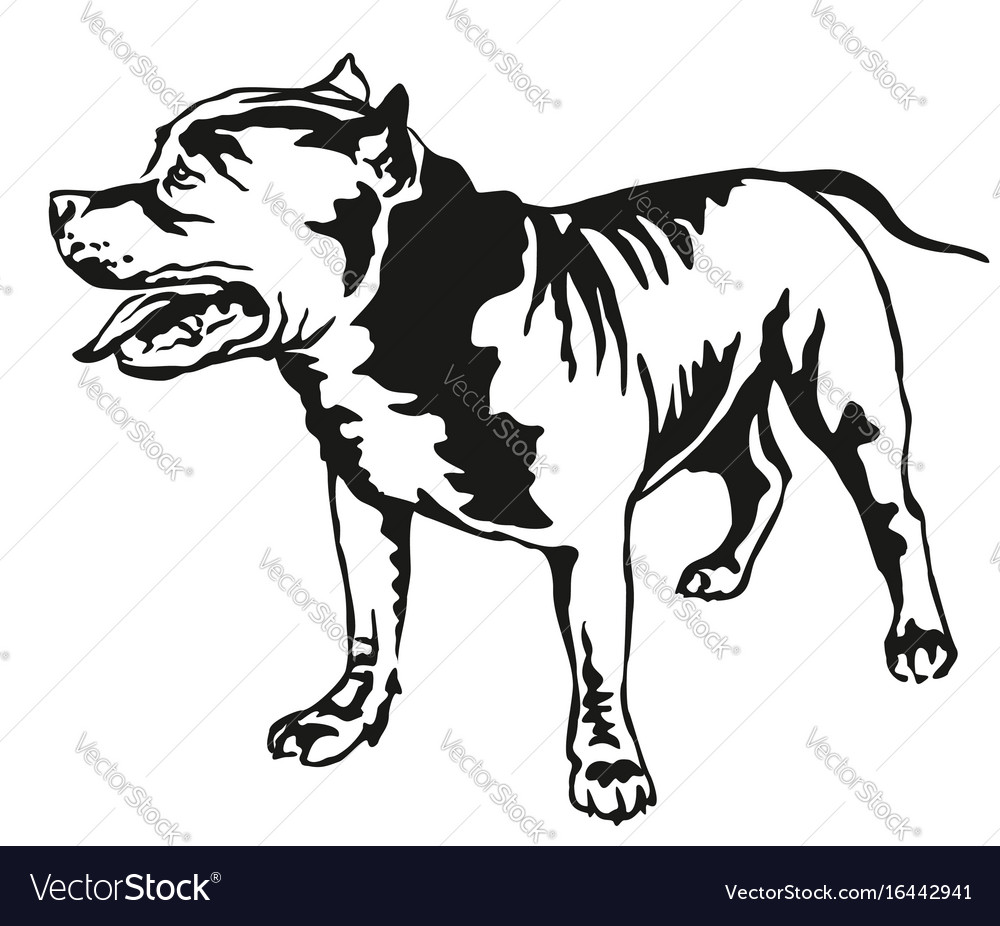 Decorative standing portrait of american pit bull