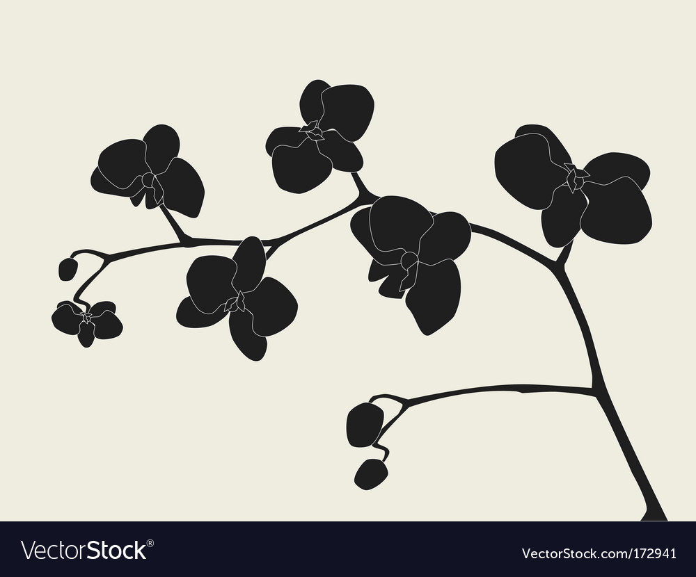 Orchid branch silhouette vector image