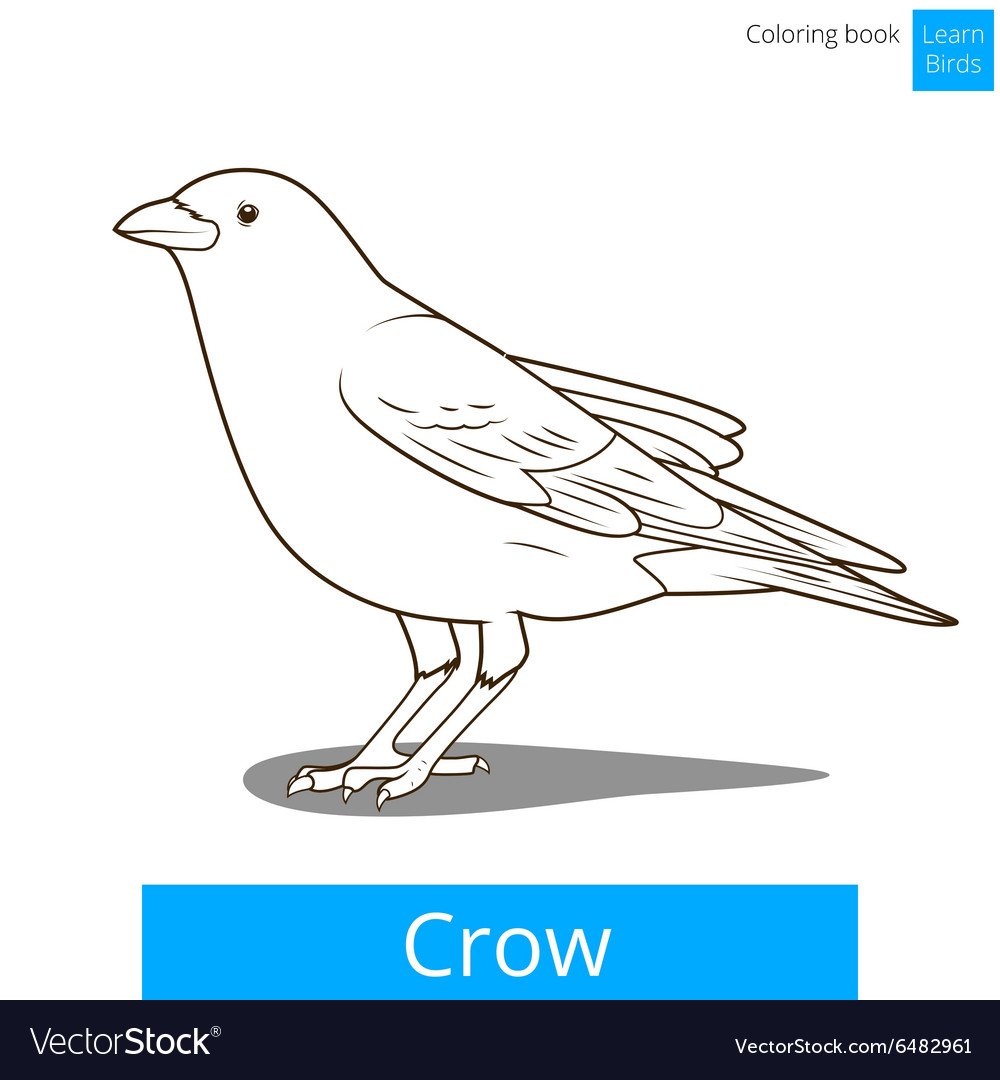 Crow Learn Birds Coloring Book Royalty Free Vector Image