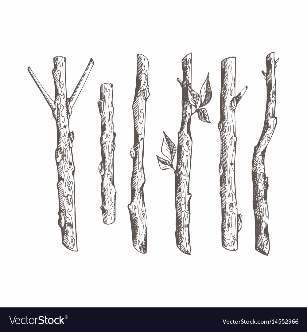 Tree Branches Set Hand Drawing Royalty Free Vector Image