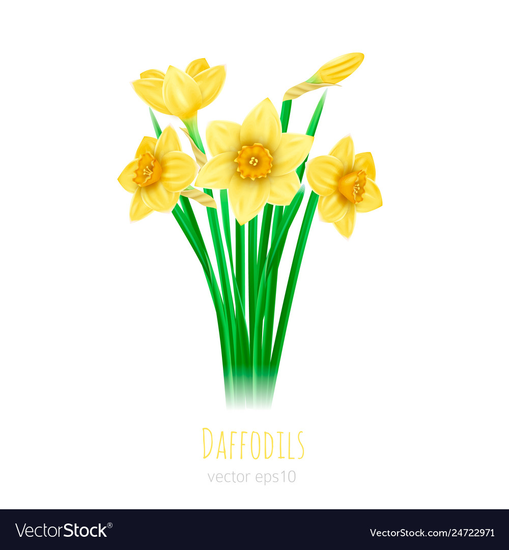 Five daffodils with leaves on