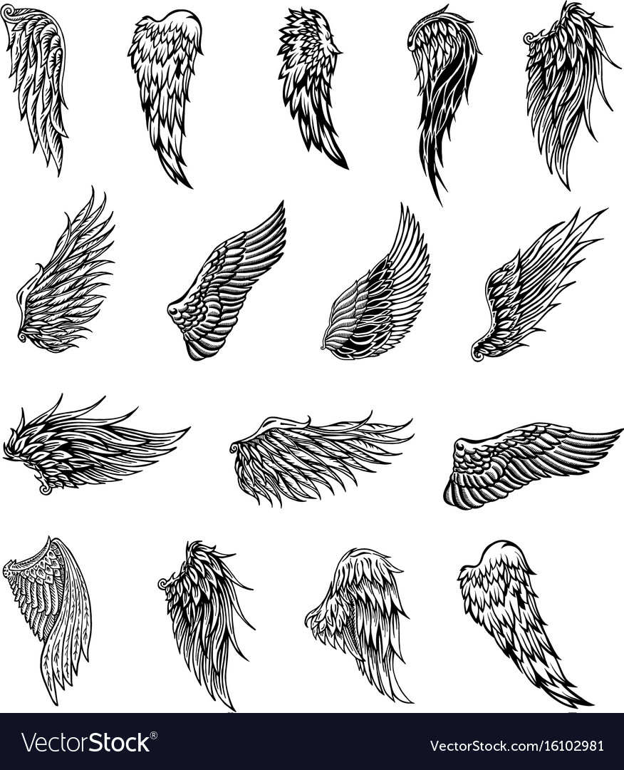 Wings graphic