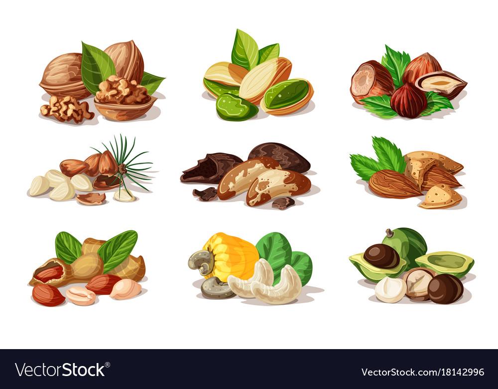 Cartoon colorful nuts set vector image