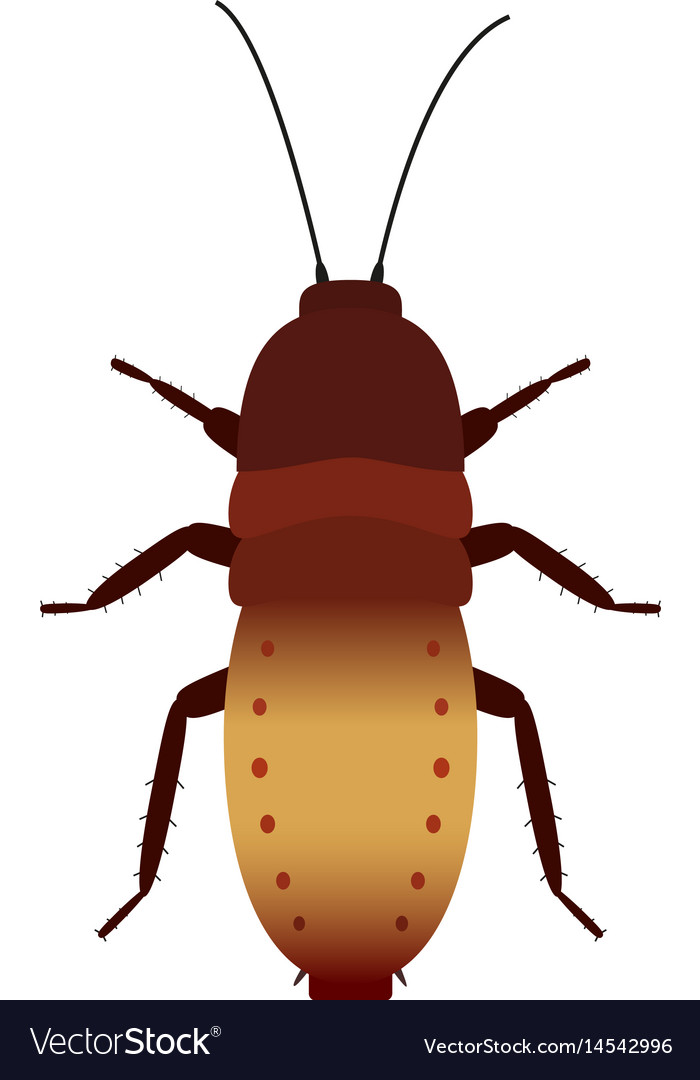 Colored cockroach vector image