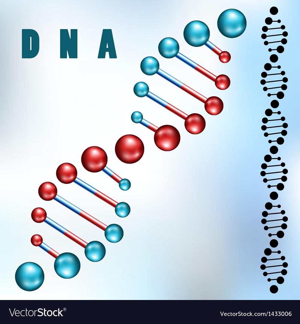 DNA strand vector image