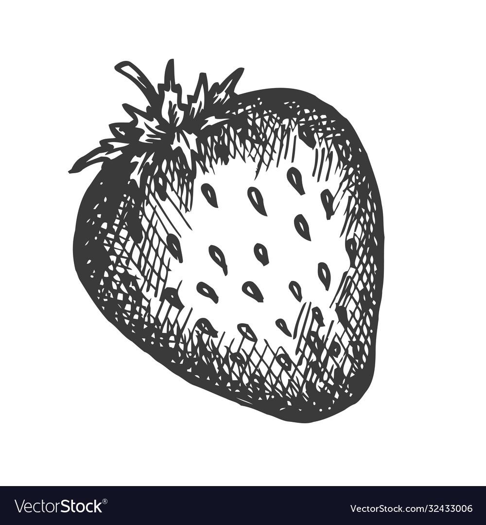 Strawberry hand drawn sketch fruit