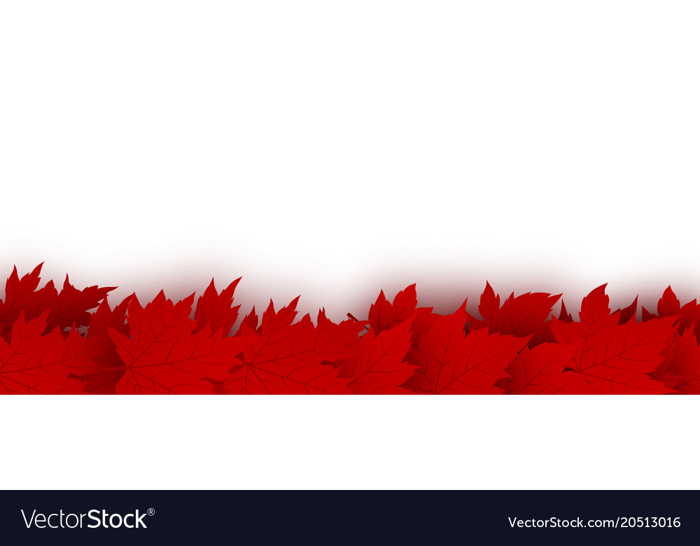 Canada day background design of red maple leaves