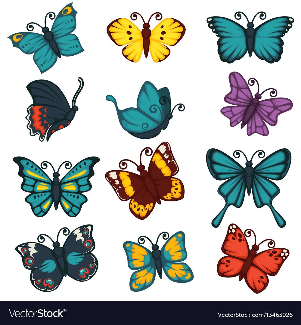 butterflies species types decoration design vector image