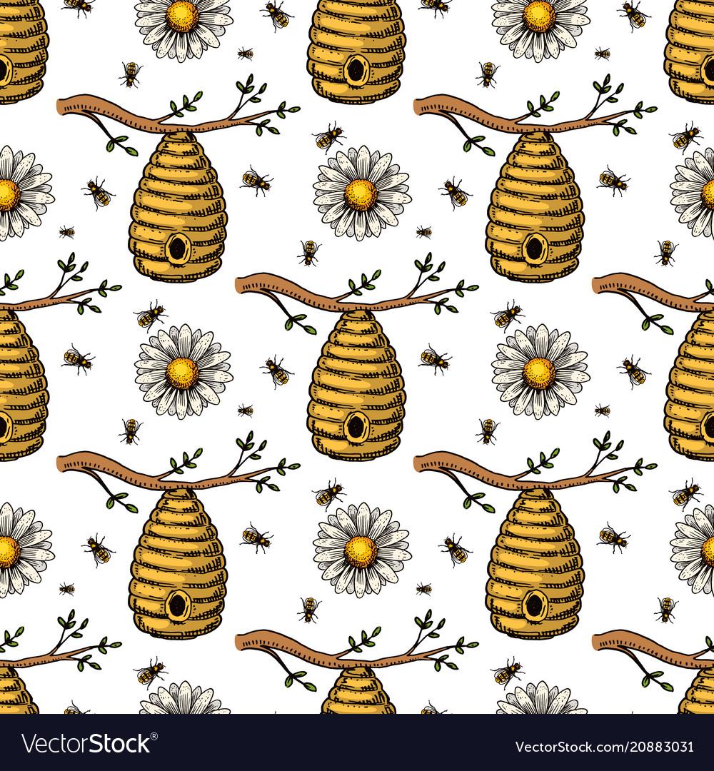 Apiary bee chamomile hand drawn vintage