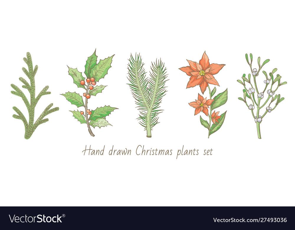 Christmas plant branch set holly mistletoe