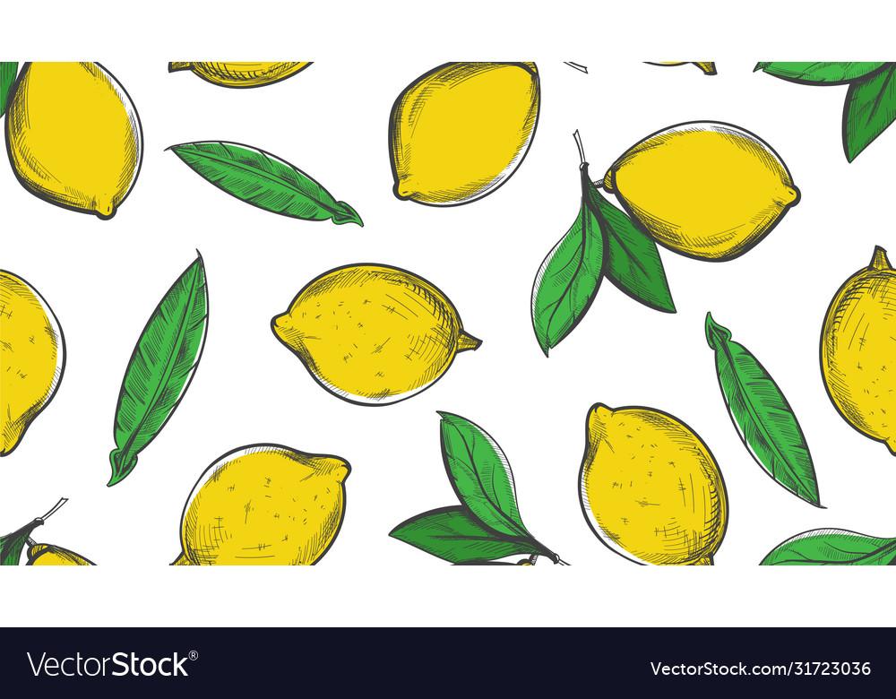 Citrus sketch pattern summer lemon background